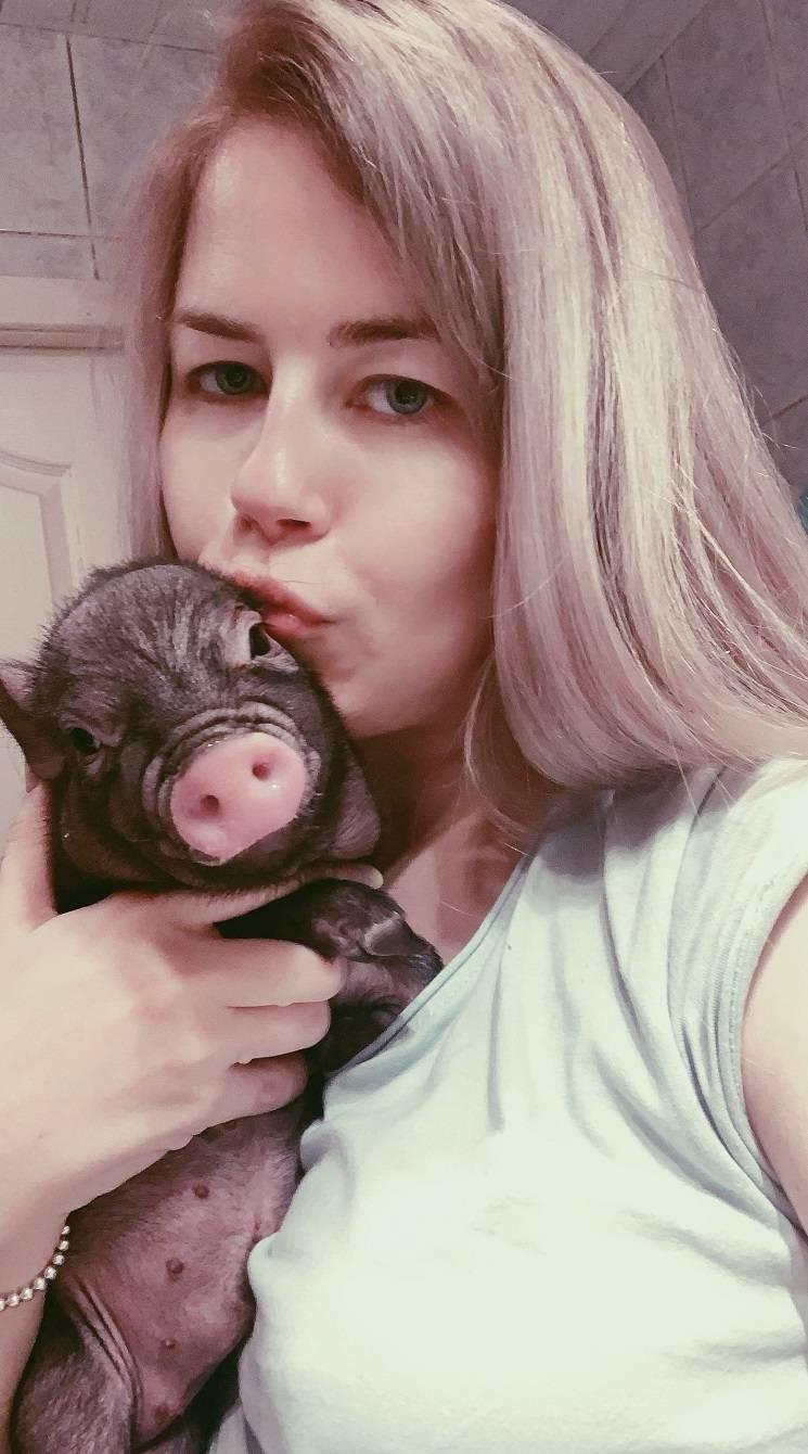 любимая свинья