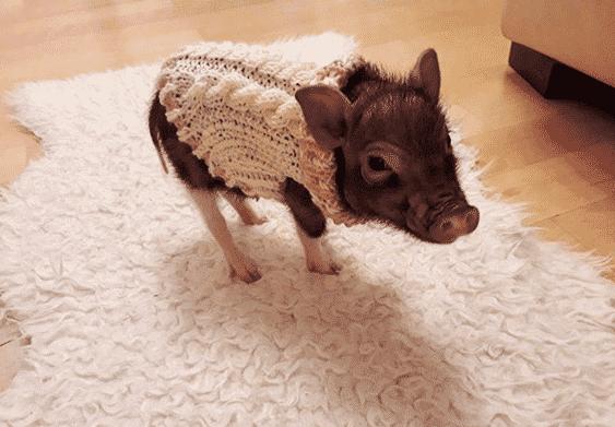 Купер в свитере