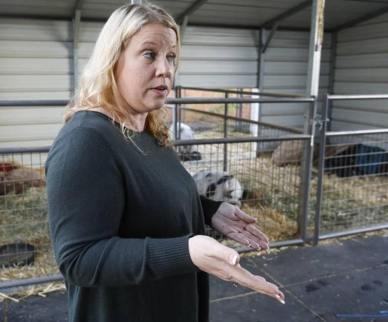 Элдер возмущена нападками властей на её свиней