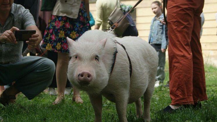 свинотусовка