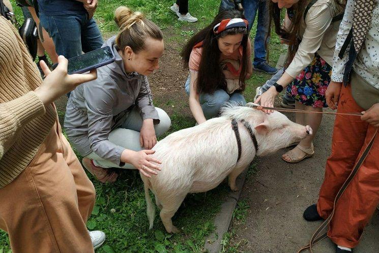 свинотусовка и Марта