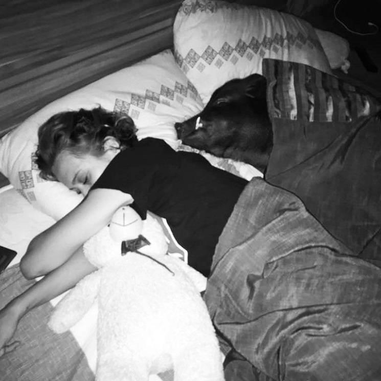 хрюша в кровати