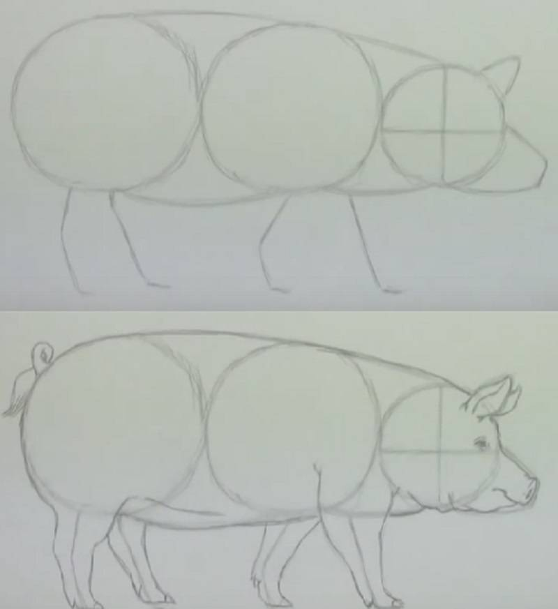 раскраска свиньи