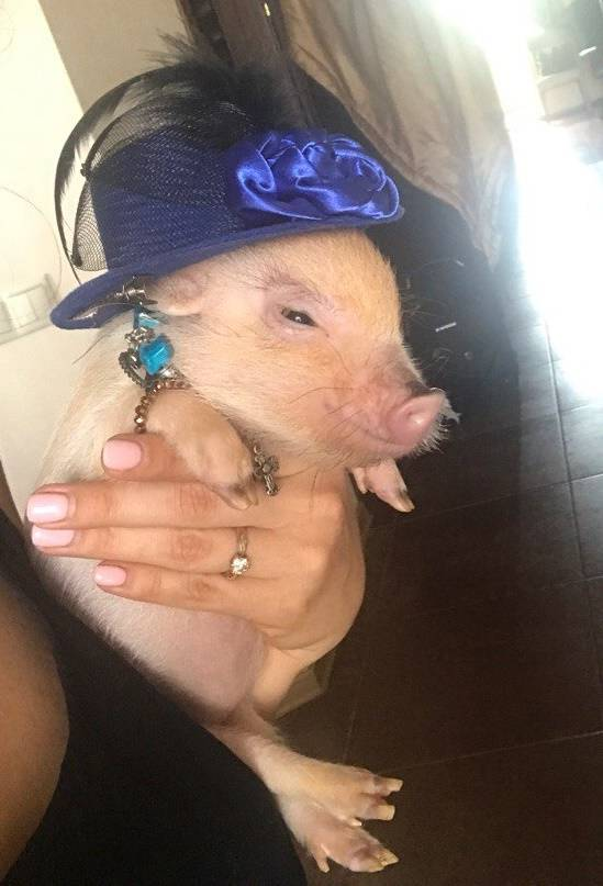 Нарядная свинья