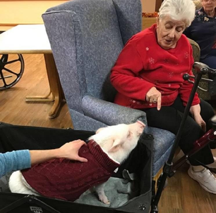 мини-пиг помощник пожилым людям