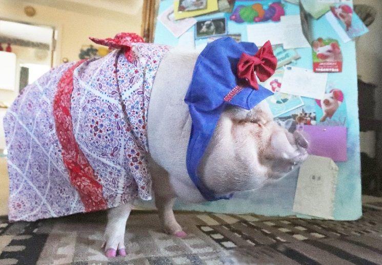 свинья художник