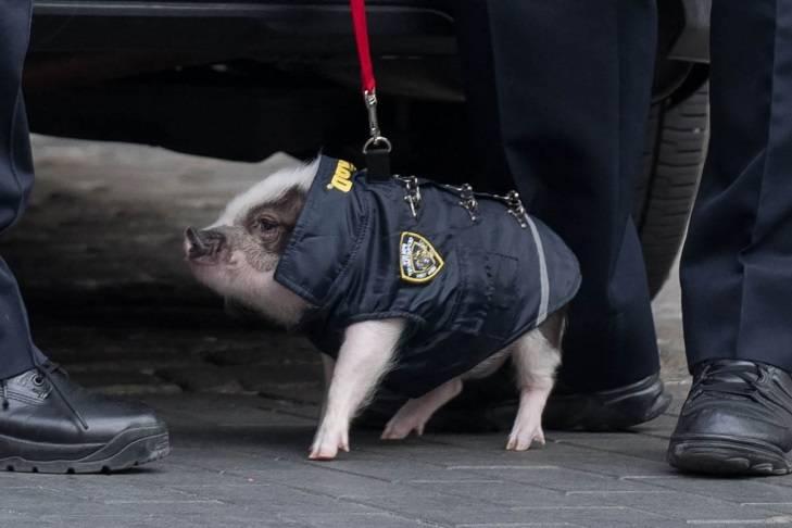 поросёнок полицейский