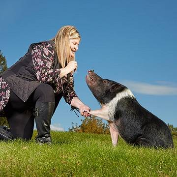 Свинья со многими талантами: Книга рекордов Гиннесса 2020