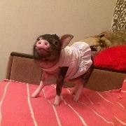 Поросёнок Пухля в платье