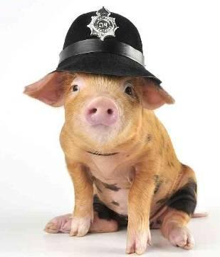 Свинские профессии