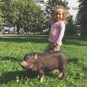 Свинья в москвовском парке