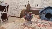 Деревенская свинья