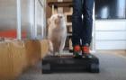 Мини пиг и фитнес