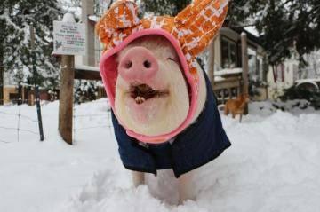 Эстер на снегу