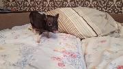 Свинья в постели