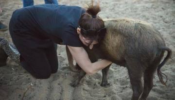 Миниатюрных свинок отправляют на ферму из-за того, что они не домашние питомцы