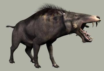 Эволюция свиней: теории и интересные факты