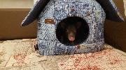 У свинки в доме свой дом