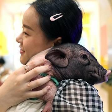 Мини-пиги – лучшее лекарство от стресса!