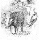 Микростоникс – древний и самый близкий родственник кабана и свиньи