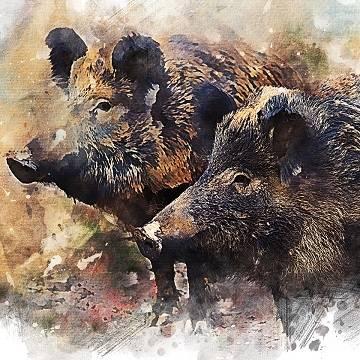 Свинья: символ года и не только 2019!