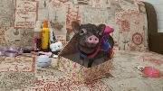 Подарок специально для свиньи